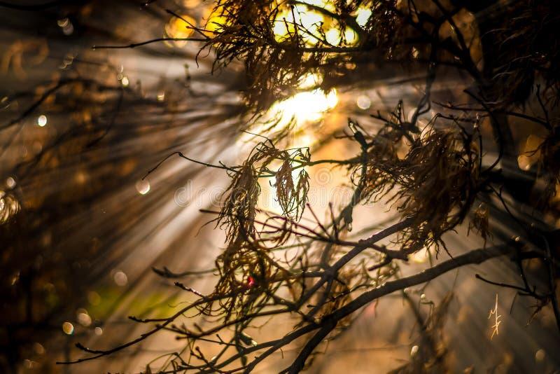 Лучи Солнця стоковое фото