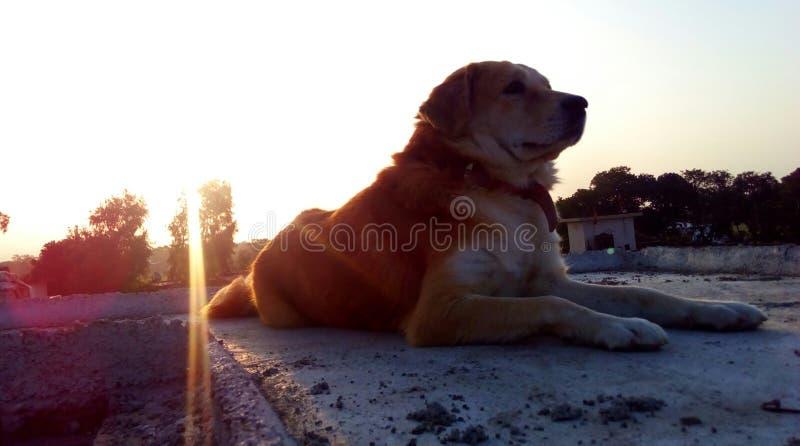 Лучи Солнця на собаке стоковое фото rf