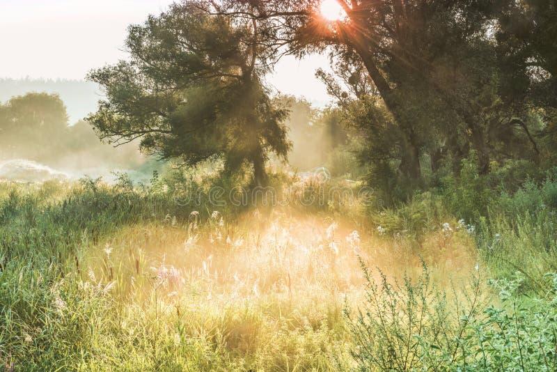 Лучи Солнця до ` s тумана и дерева silhouette на зоре стоковые фотографии rf