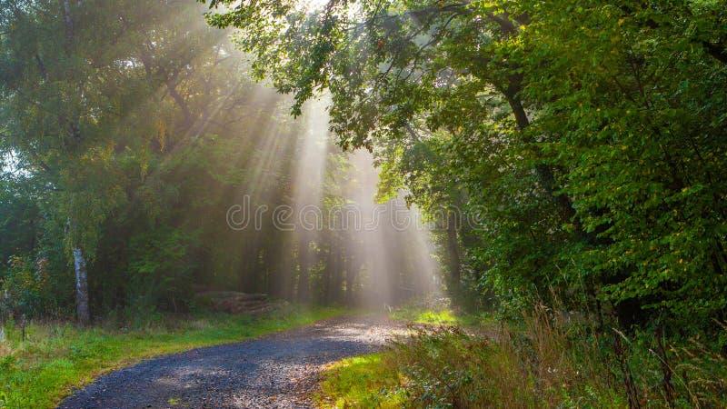 Лучи через деревья стоковая фотография