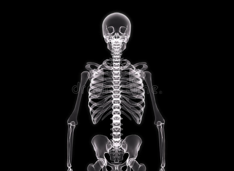 луч тела людской x иллюстрация вектора