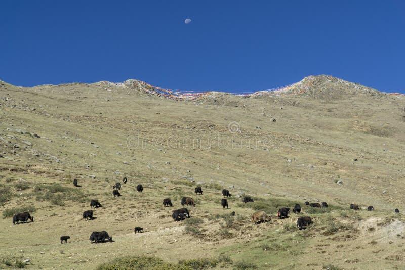 Лхаса бывший Тибет теперь Китай, монастырь Ganden стоковые изображения rf