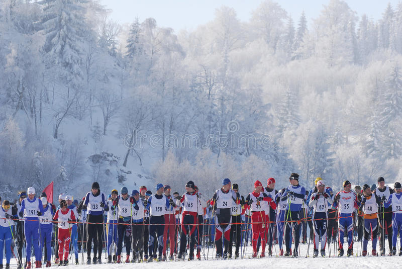 Лыжники по пересеченной местностей бежать в лесе стоковые фотографии rf