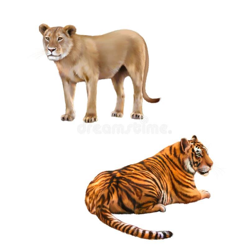 Львица - пантера leo, тигр Бенгалии, Тигр стоковые фотографии rf