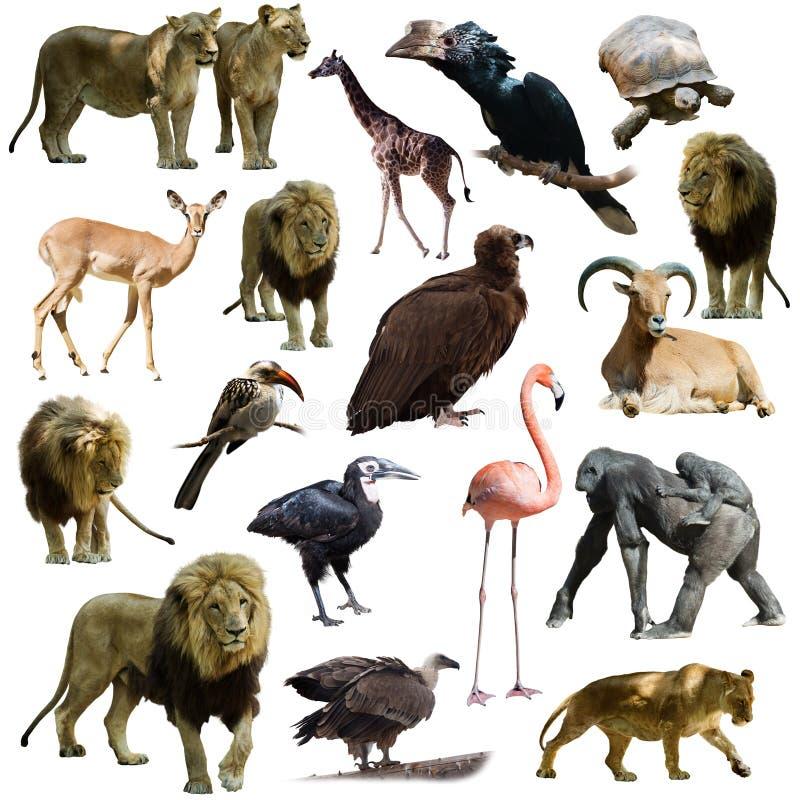 Львы и другие африканские животные стоковые фото