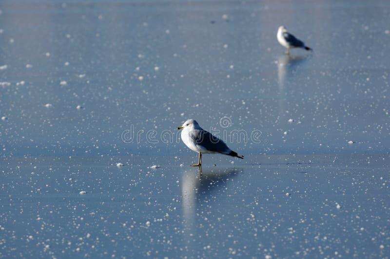 льдед утончает стоковое фото