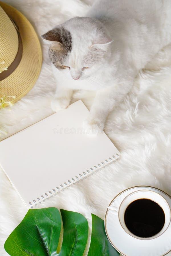 Любимый белый шотландский прямой кот, сидящий на ковре Фур и ждущий своего владельца, чтобы вернуться стоковая фотография rf