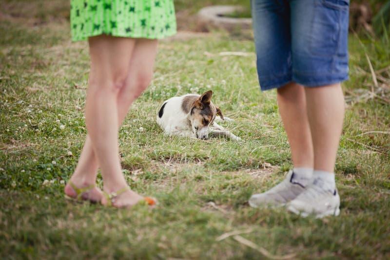 любовники и собака на прогулке лета стоковые фотографии rf