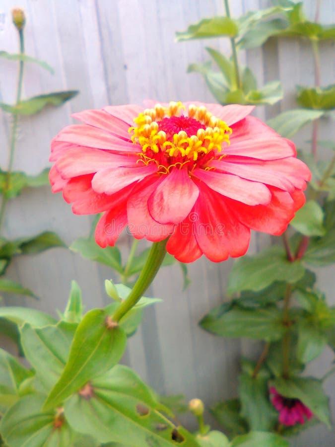 Любовники цветка стоковое изображение