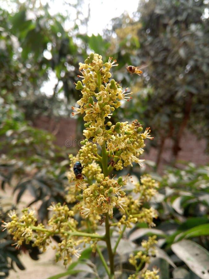 Любовник пчелы стоковое изображение