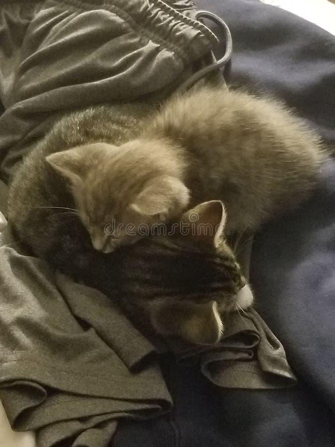 Любовь котенка стоковое изображение rf