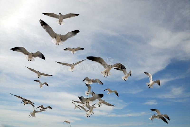 любознательние чайки стоковая фотография