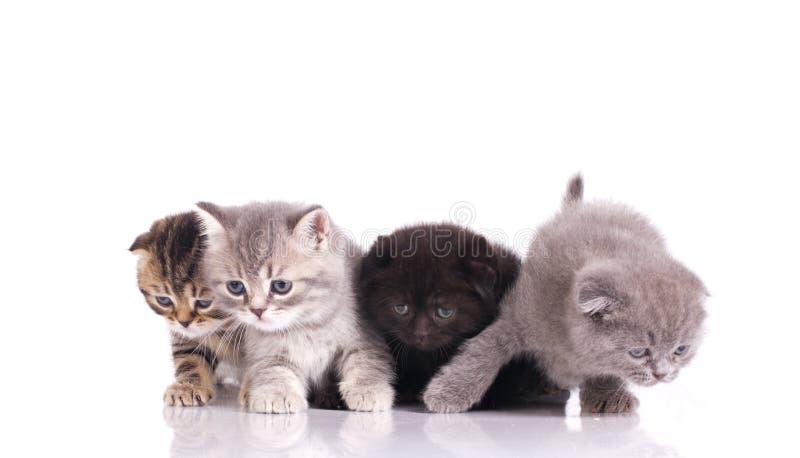любознательние 4 котят стоковая фотография