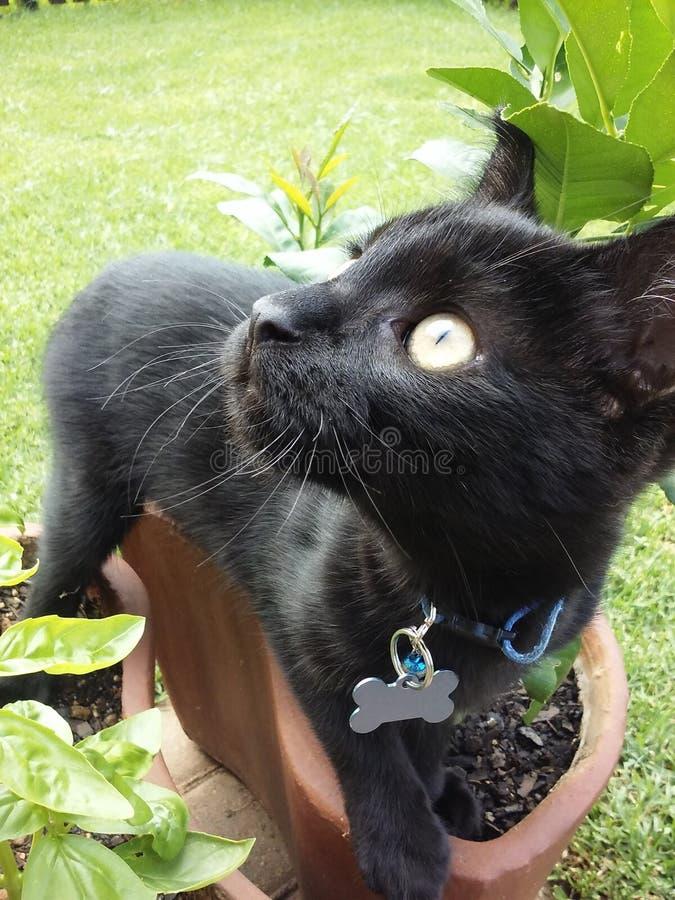 любознательний котенок стоковые изображения rf