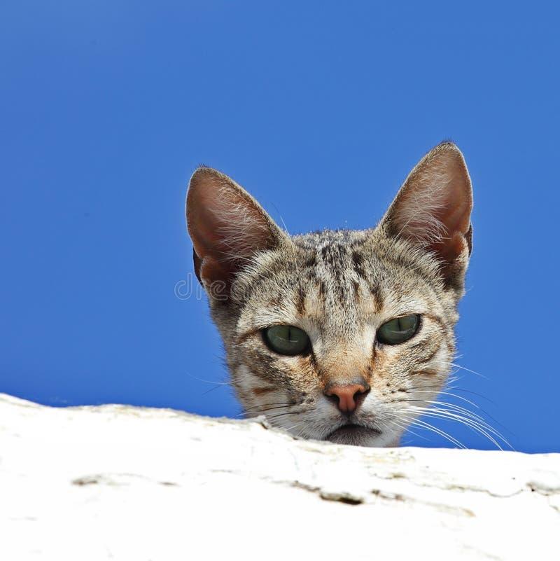 Любознательний кот Стоковая Фотография RF