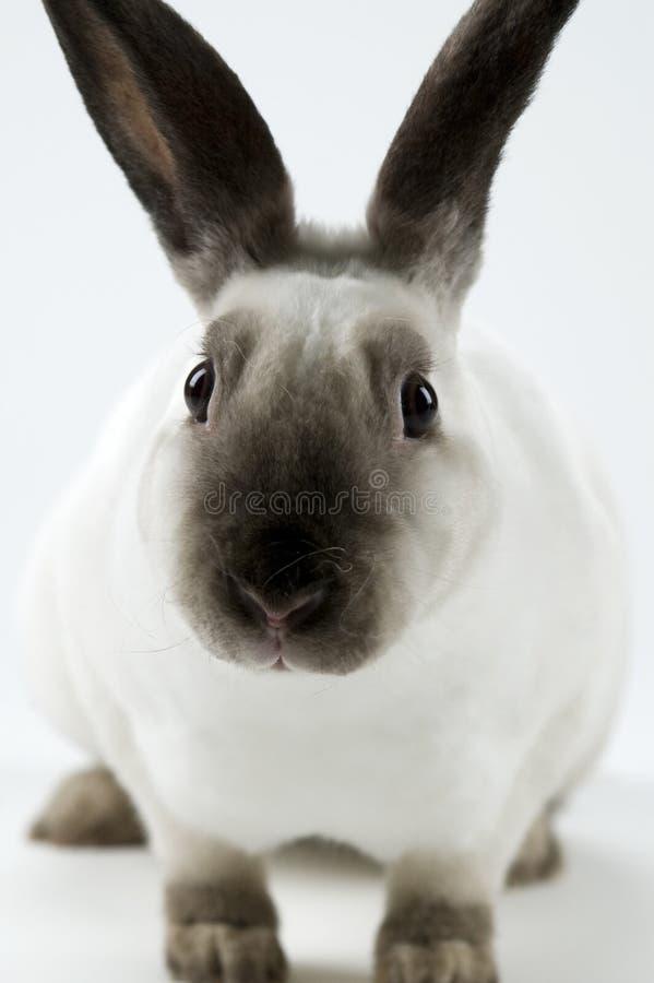 любознательний кролик стоковое фото rf