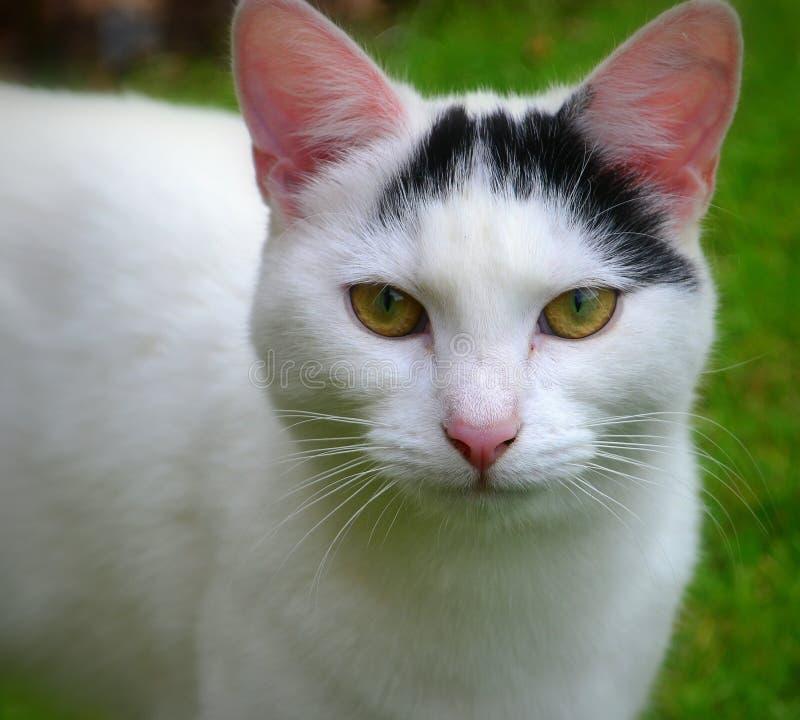 Любознательный женский кот стоковое изображение