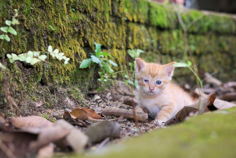Любознательный милый кот стоковое изображение