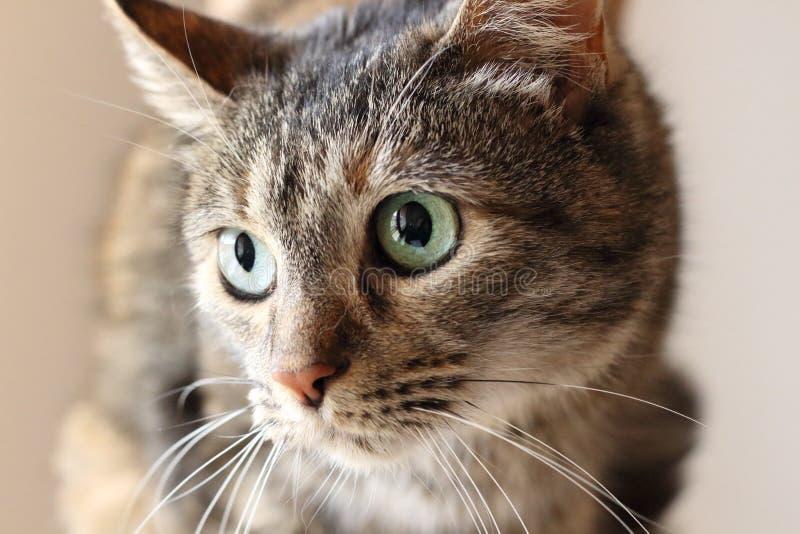 Любознательный кота конец вверх стоковые изображения rf