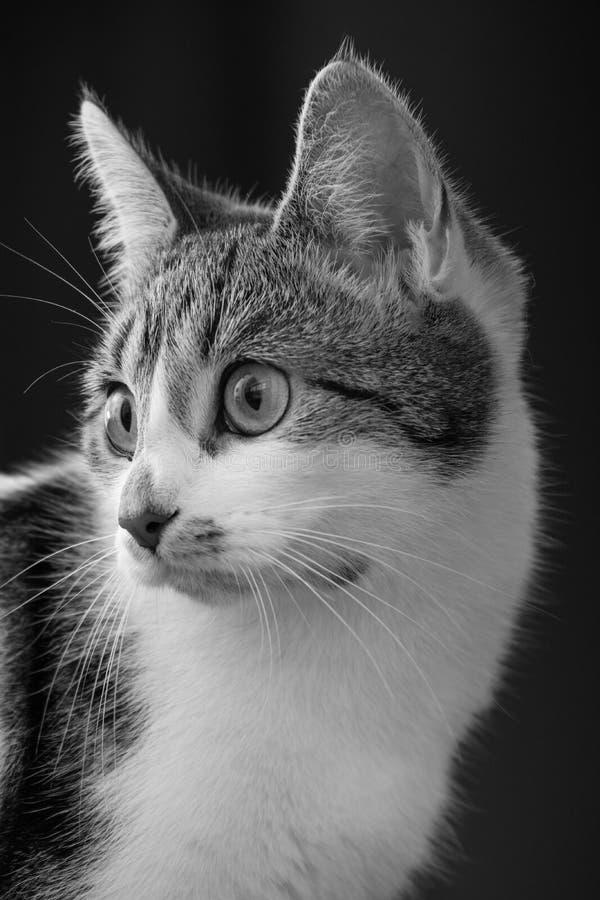 Любознательный малый кот Tabby стоковое фото