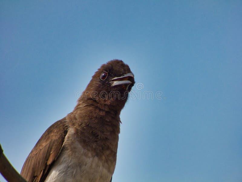 Любопытная пташка стоковая фотография rf