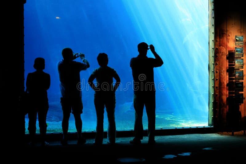 люди аквариума стоковые изображения rf