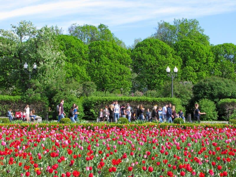 Люди в парке, glade тюльпанов стоковое фото rf