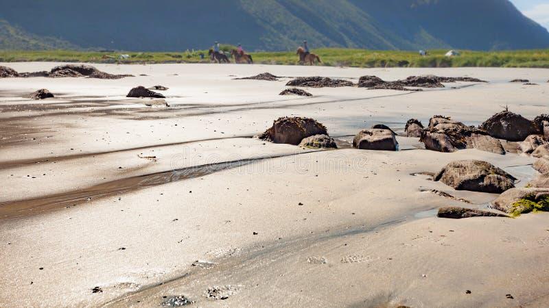 Люди ехать на лошади назад на пляже, Lofoten Норвегии стоковые изображения rf