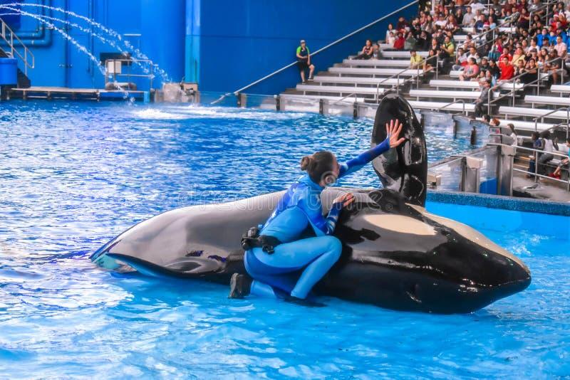 Люди ждать начало одного шоу океана с милыми дельфин-касатками на Seaworld 12 стоковые изображения