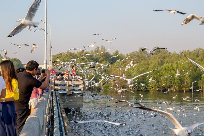 Люди или путешественник приходят увидеть летание птицы чайки на море на poo челки, Samutprakan, Таиланде стоковые изображения rf