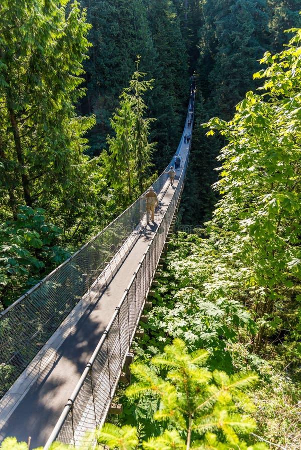Люди на висячем мосте Capilano среди деревьев стоковые изображения