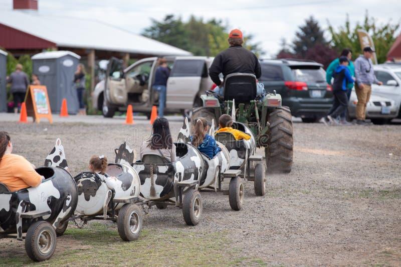 Люди нося трактора в вагонах игрушки коровы стоковое изображение rf