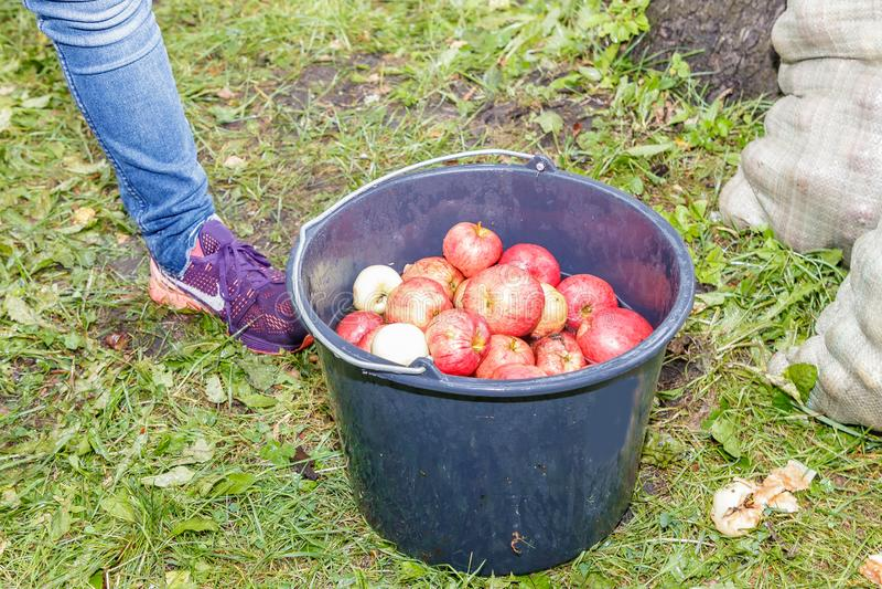 Люди прочитали яблока стоковые фотографии rf