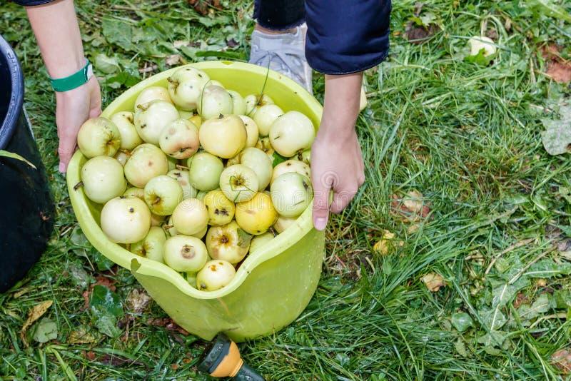 Люди прочитали яблока стоковые изображения