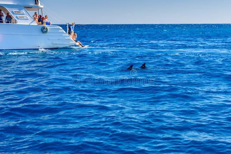 Люди тратя время на белой яхте в Красном Море и наблюдая дельфинов стоковые фото