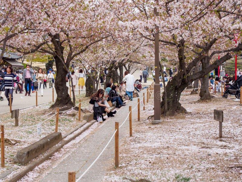 Люди участвуют в пикнике под деревьями вишневого цвета, замком Himeji, Японией стоковое фото