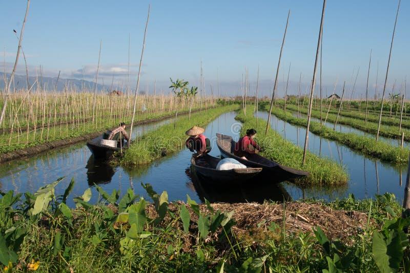 Люди Intha работая на их плавая саде в озере Мьянме Inle на 18 decenber 2016 стоковые изображения