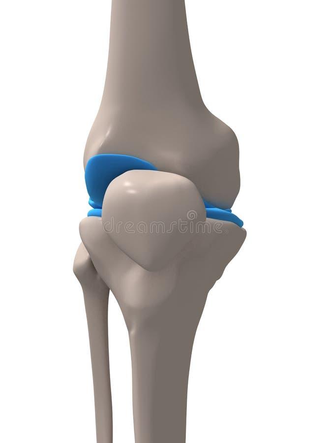 людское колено бесплатная иллюстрация