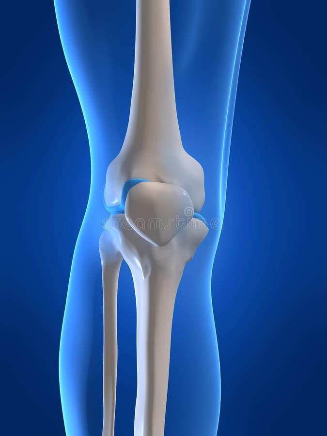 людское колено иллюстрация вектора