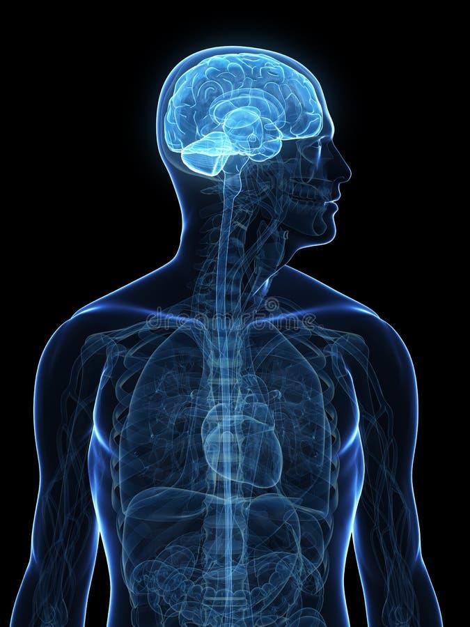 Людской выделенный мозг иллюстрация вектора