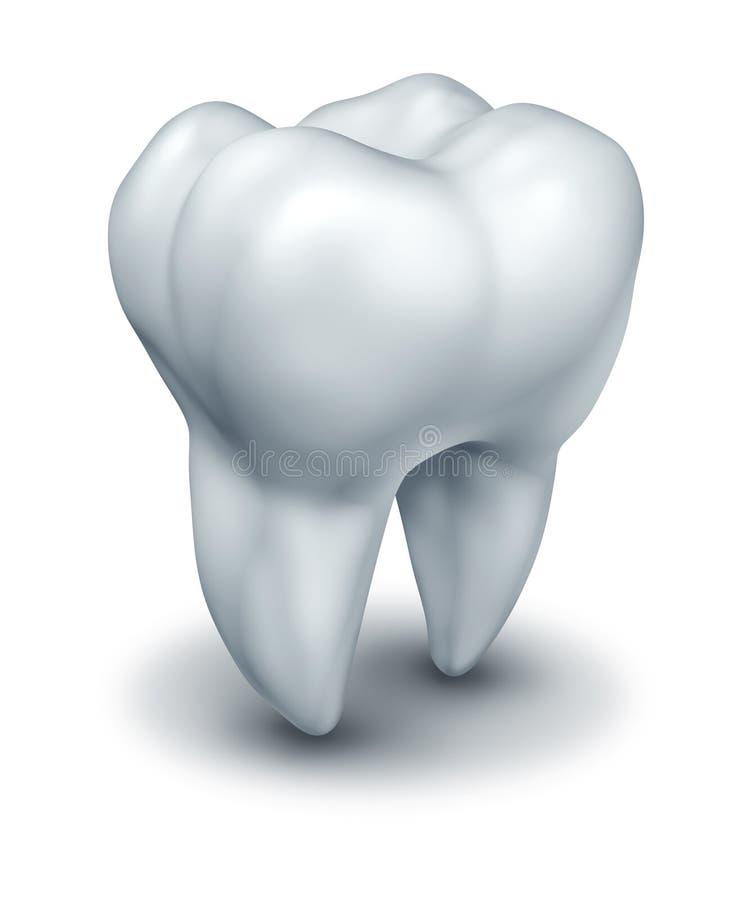 людской зуб иллюстрация штока