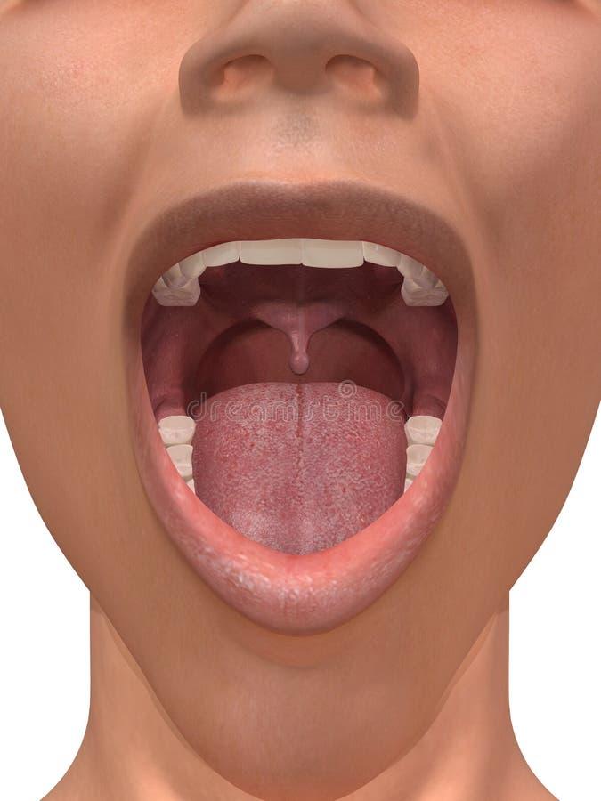 людской рот иллюстрация штока