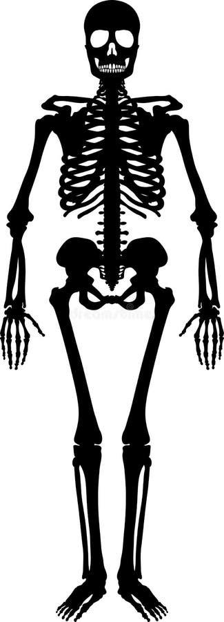 людской скелет иллюстрация вектора