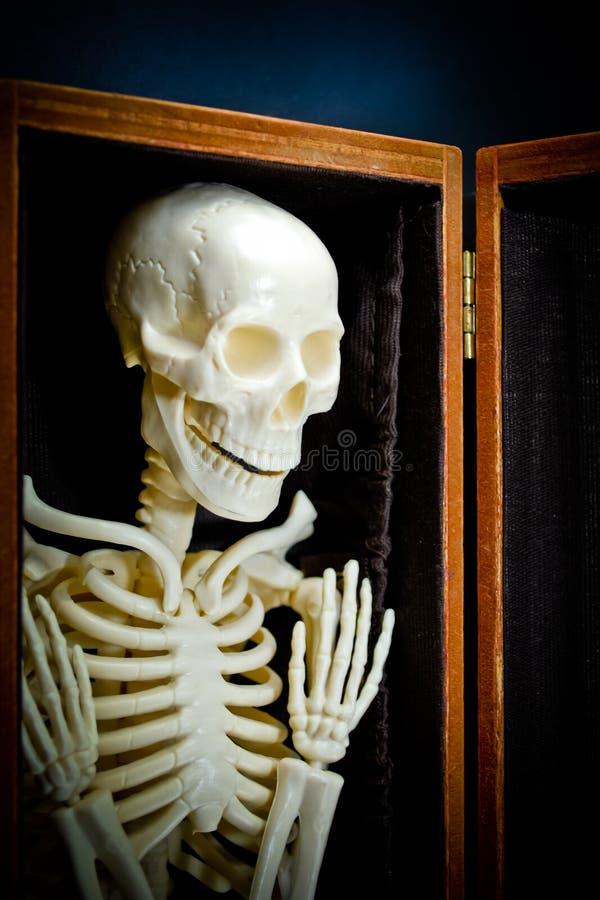 людской скелет стоковые изображения rf
