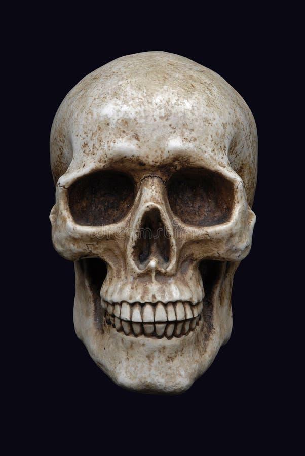 людской череп стоковые фотографии rf