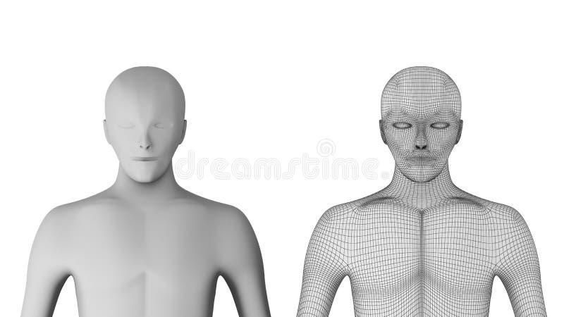 людск Модель Wireframe с линиями на белой предпосылке иллюстрация штока