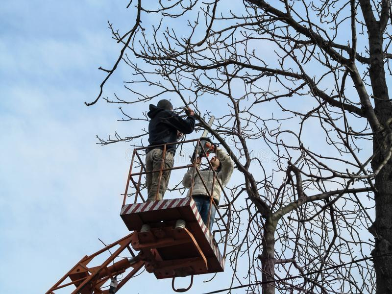 2 люд в ветвях пилы- случайных одежд каштана с цепной пилой, стоя на воздушной рабочей платформе сеть весны знамен осени горизонт стоковое фото rf