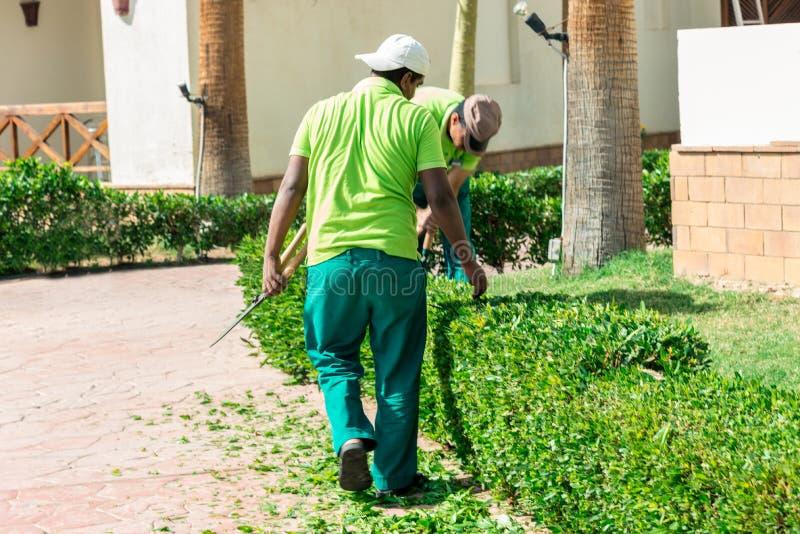 2 люд в зеленых равномерных кустах зеленого цвета отрезка стоковые изображения rf