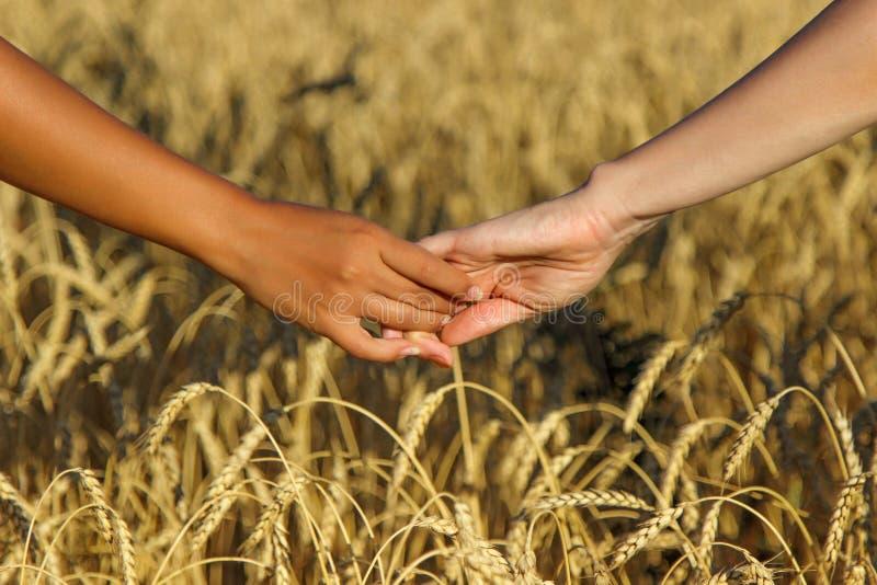 2 люд держа руки над предпосылкой пшеничного поля стоковая фотография rf