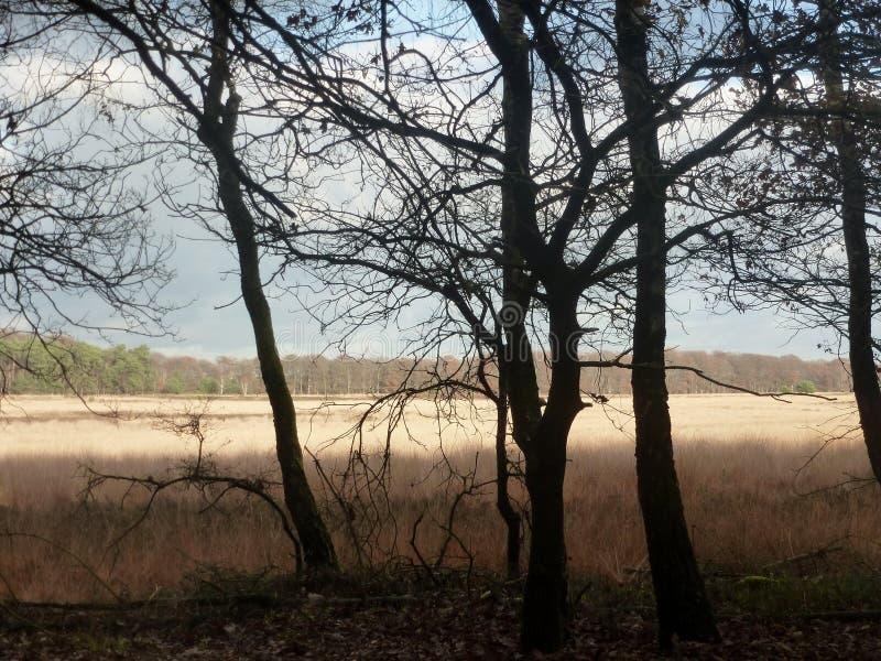 Люди далеко далеко, Ede, Нидерланды стоковое фото rf
